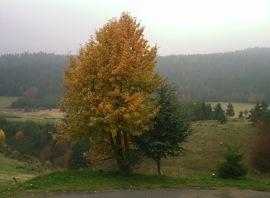 Paysage d'automne ...